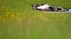 Magnussen mangler fart ved sidste træning i Østrig