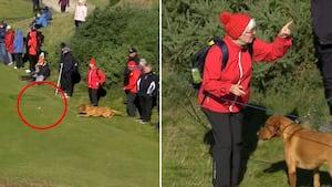 Vuf, vuf: Hund stjæler golfbold og alt opmærksomheden