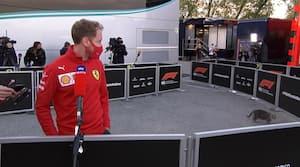 Imolas lykkekat afbryder Vettel-interview: 'Kan ikke lide katte - men måske denne'