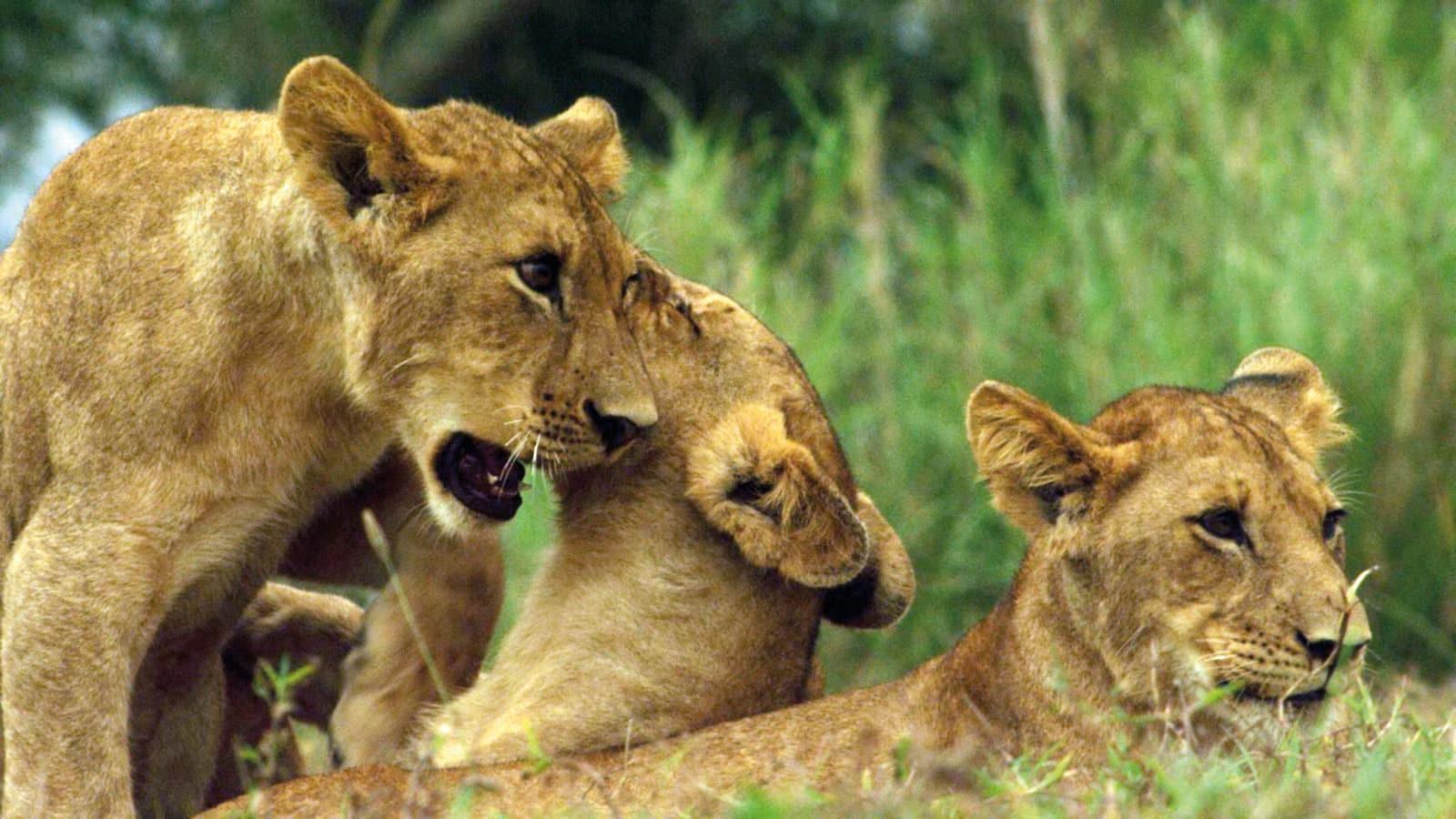 gorongosa-park-rebirth-of-paradise