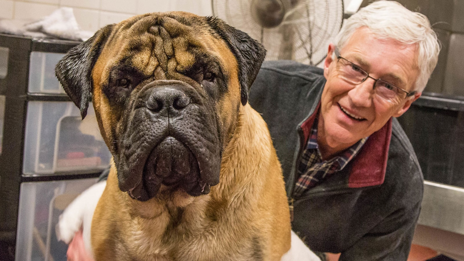 paul-ogrady-for-the-love-of-dogs