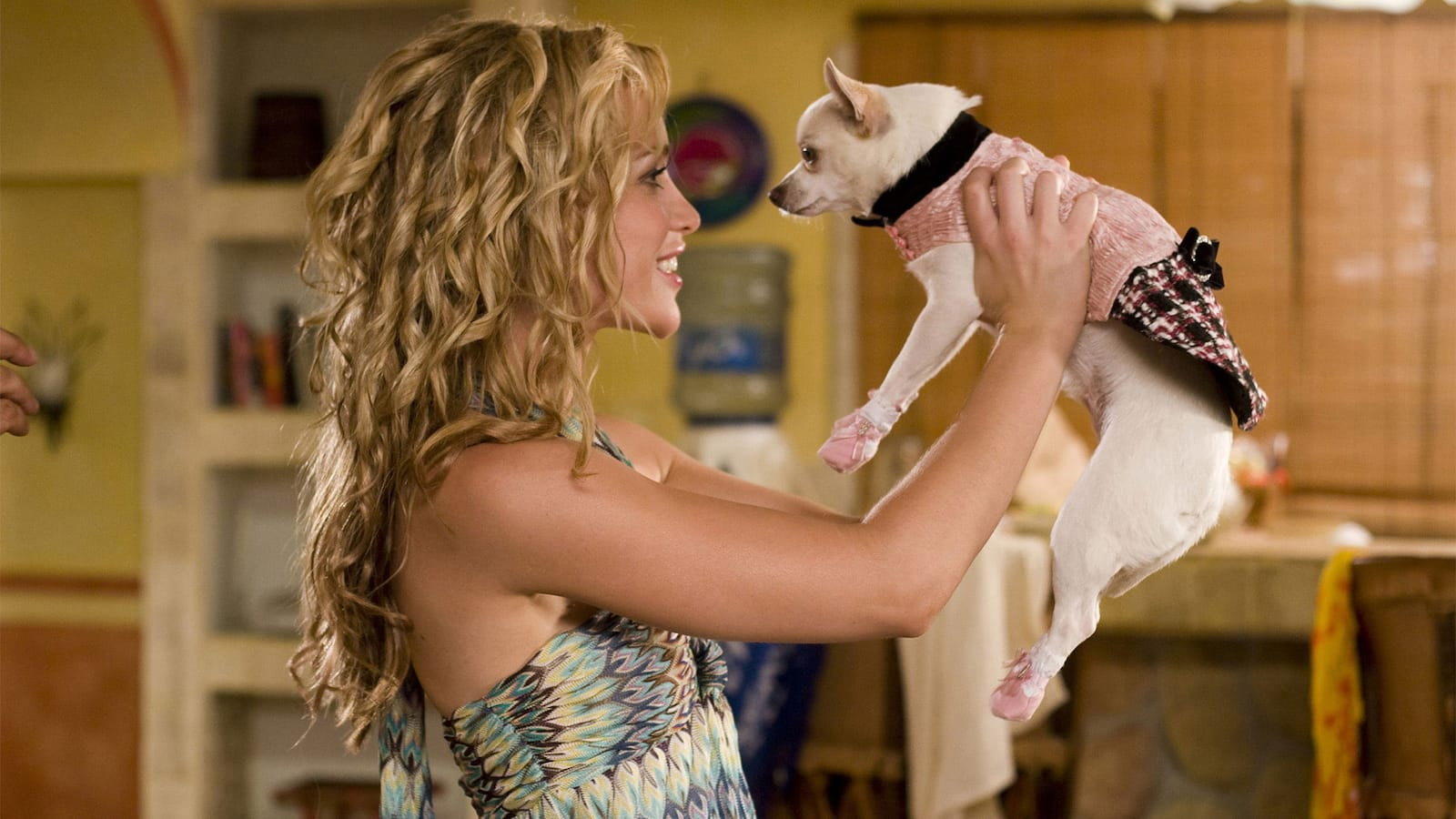 beverly-hills-chihuahua-2008