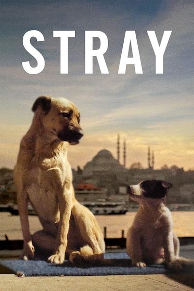 stray-2020