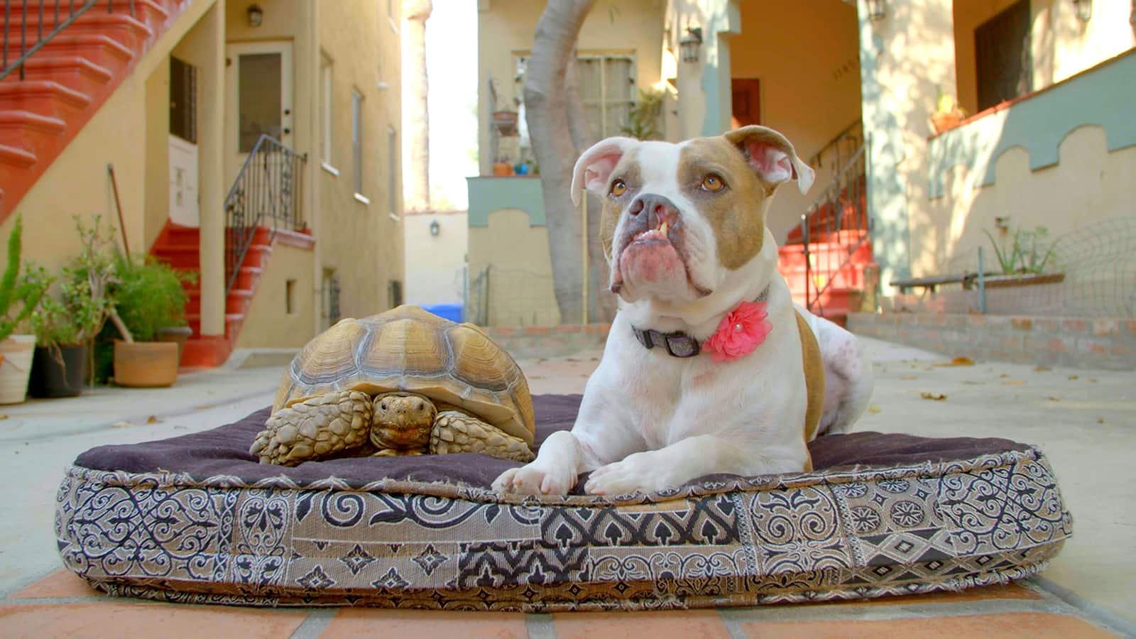 hundens-basta-van