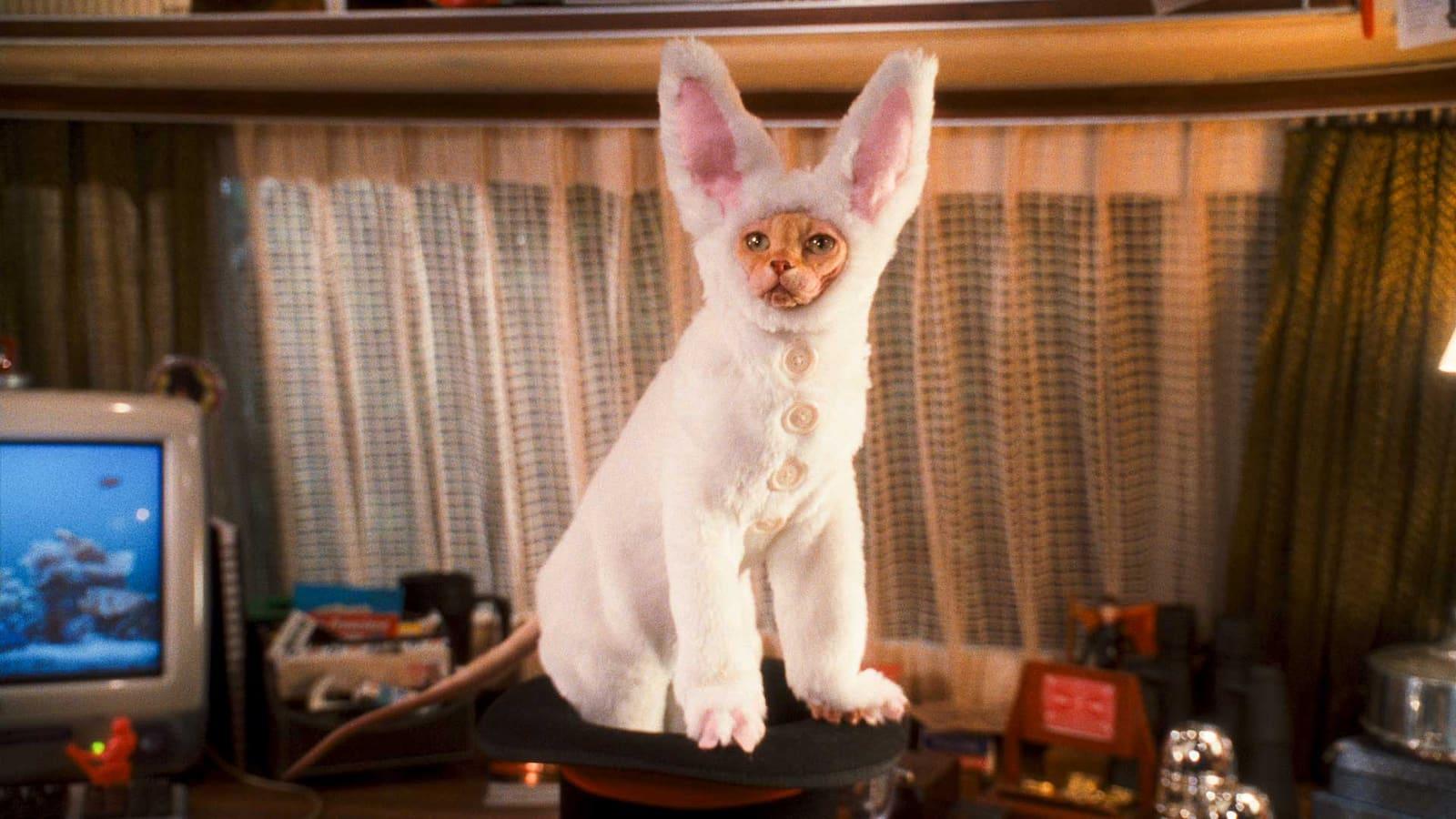som-hund-och-katt-kitty-galores-hamnd-2010