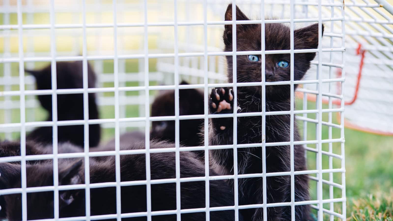 kitten-rescuers