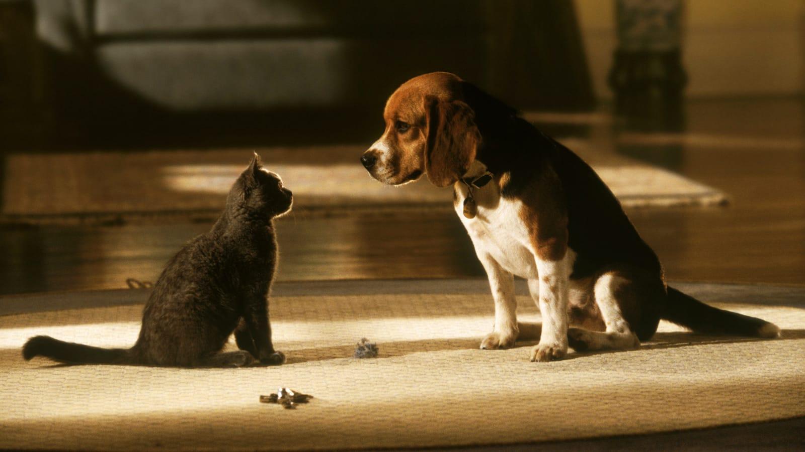 som-hund-och-katt-2001