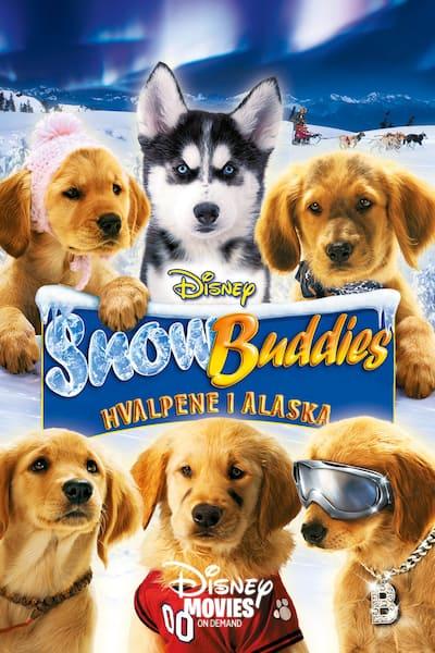 snow-buddies-hvalpene-i-alaska-2008