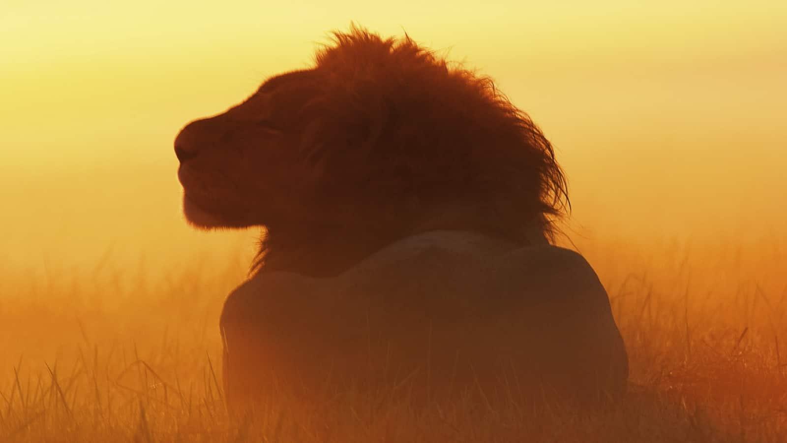 swamp-lions-2010
