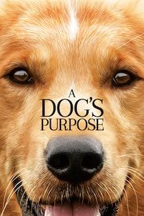 a-dogs-purpose-2017