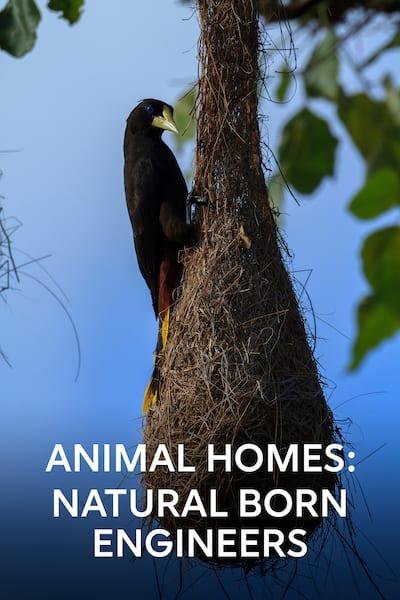 djurens-hem-naturens-ingenjorer