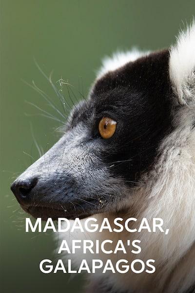 madagaskar-afrikas-egna-galapagos-2019