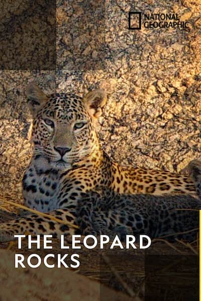 the-leopard-rocks-2016